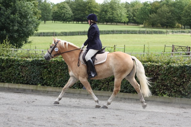 Nicco doing dressage