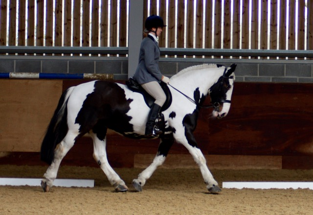 Molly doing dressage at Writtle College