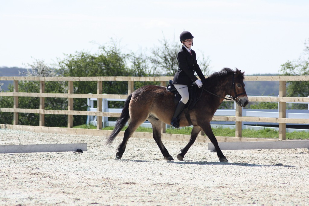 Tawny doing dressage