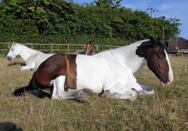 Rafferty lying down in the field