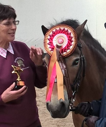 Tawny wearing his rosette
