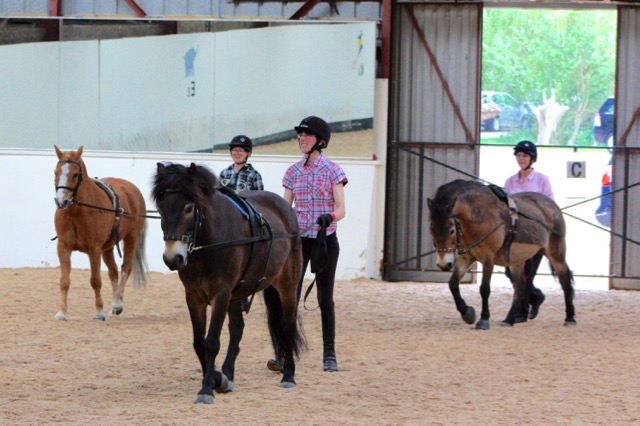 Tango, Boycie and Tawny long reining