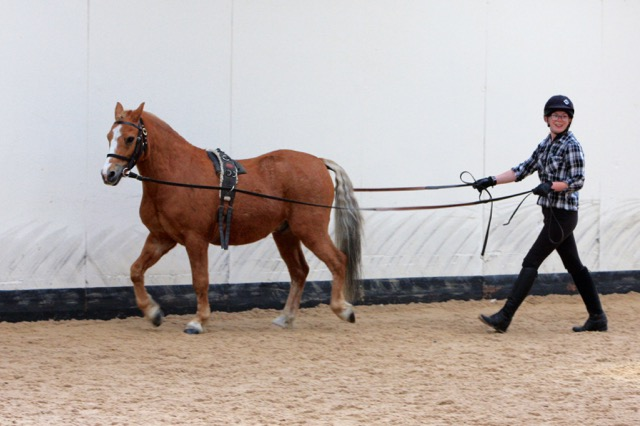 Tango long reining at open day