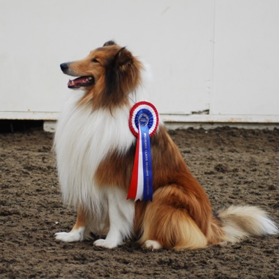 Dog with rosette