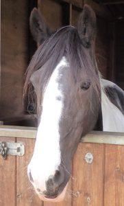 Vella looking over stable door