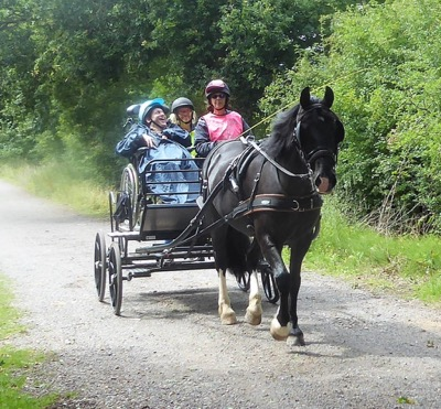 Penny being driven in the wood yard with a driver in a wheelchair
